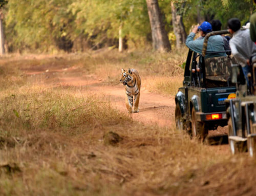 5 Tips to Enjoy a Vacation at Tadoba Tiger Reserve in a Comfortable Tadoba Accommodation